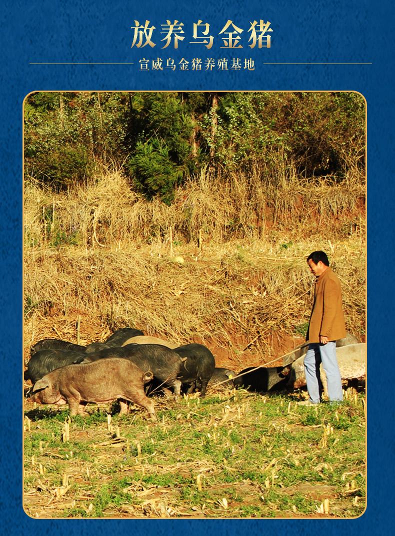 散养乌金猪