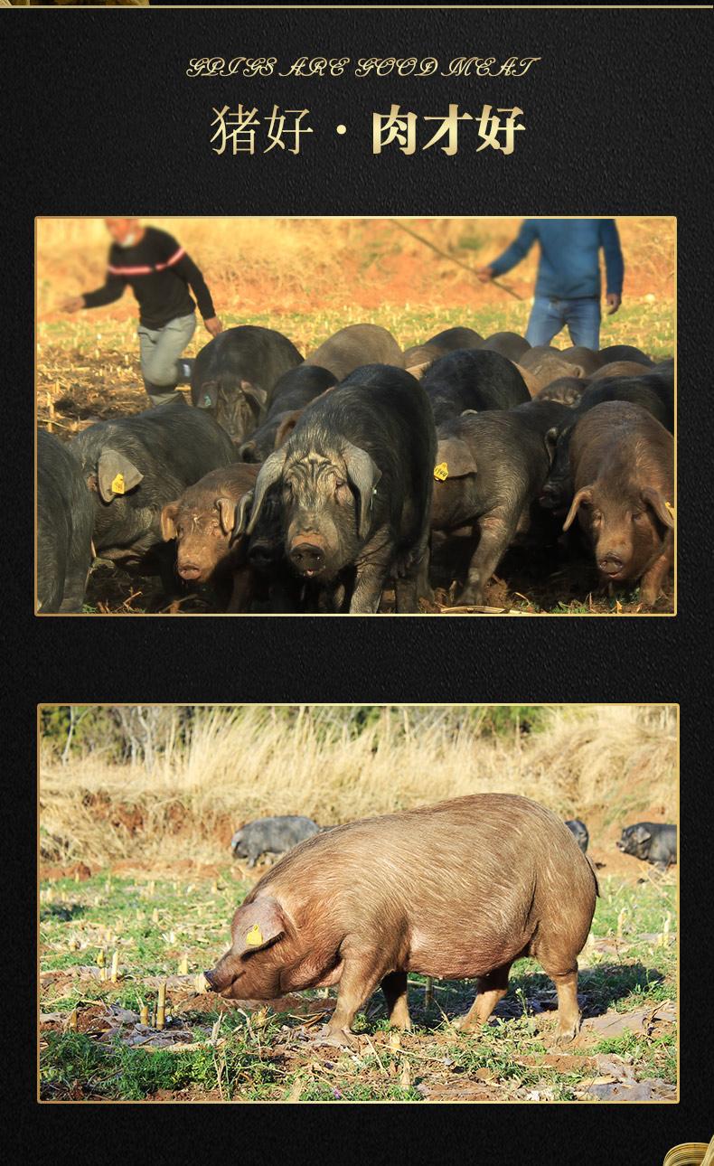 老浦家火腿制作的乌金猪