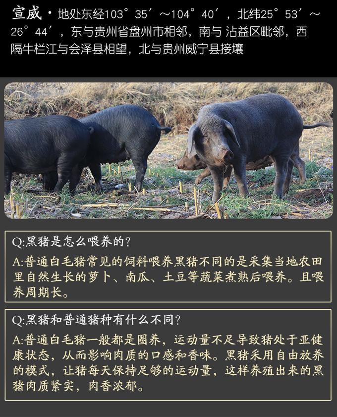 亚搏视频下载宣威亚搏视频下载黑猪
