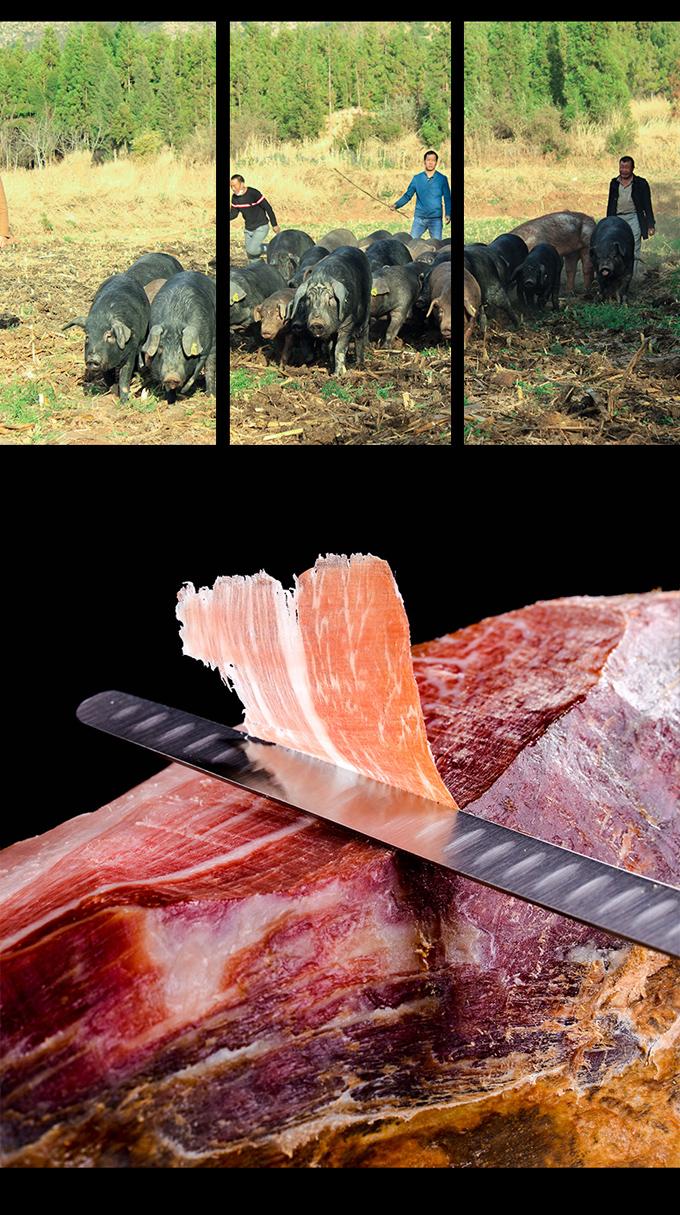 农家散养黑猪养殖环境